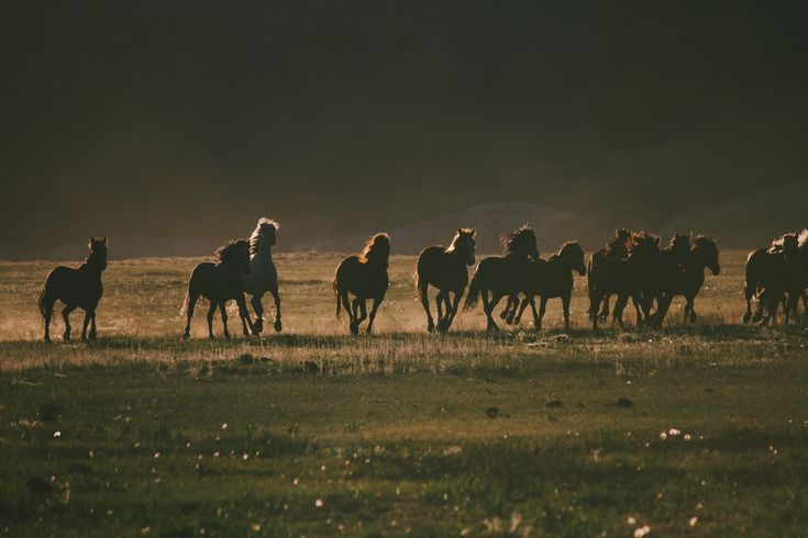 Upcoming Study Will Research Seasonal Movement of Wild Horses... What do you think?  http://snip.ly/fdq88