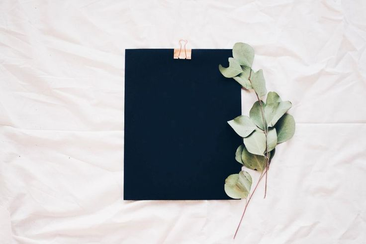 black bed sheet green plant leaves flat lay