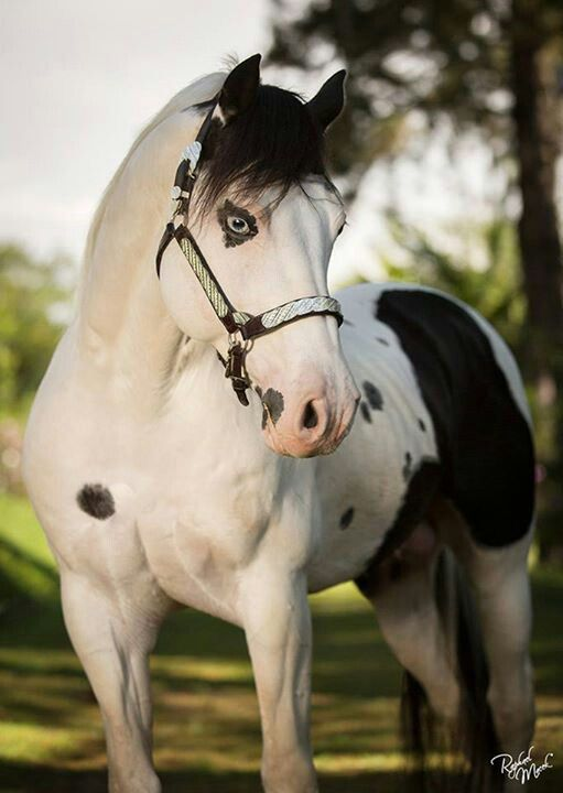 This horse had the most beautiful eyes I have ever seen...it looks like it has eyeliner on