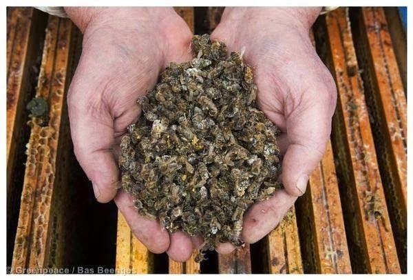 """""""Δράσεις"""" Οικολογία και Περιβάλλον: Το τέλος της μελισσοκομίας : Ασύλληπτων διαστάσεων..."""