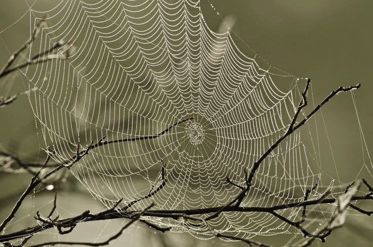 17 best images about spider webs on pinterest a tree spinning and barbed wire. Black Bedroom Furniture Sets. Home Design Ideas
