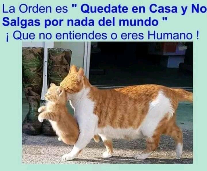 Pin De Sofia Gutierrez En Mininos Funny Memes De Animales Divertidos Memes Divertidos Meme Divertido