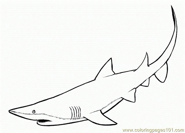 73 best Shark Coloring Pages images on Pinterest | Shark, Sharks and ...