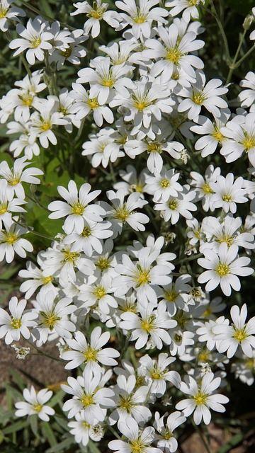 Valkoinen kukkahuntu.