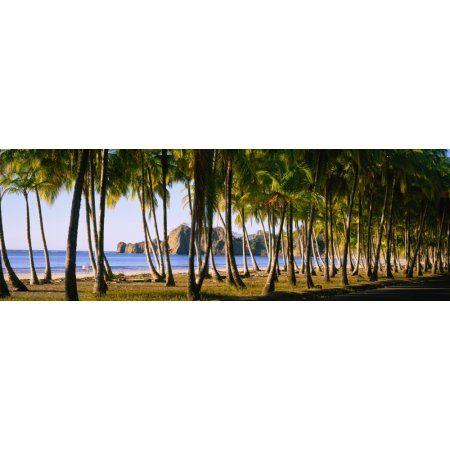 Palm trees on the beach Carrillo Beach Nicoya Peninsula Guanacaste Province Costa Rica Canvas Art - Panoramic Images (27 x 9)