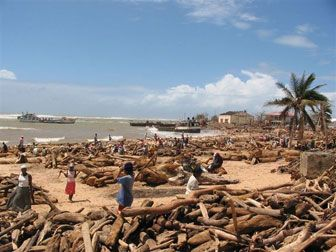 "Sixth cyclone hits Madagascar; impact ""like tsunami"", caused by logging"