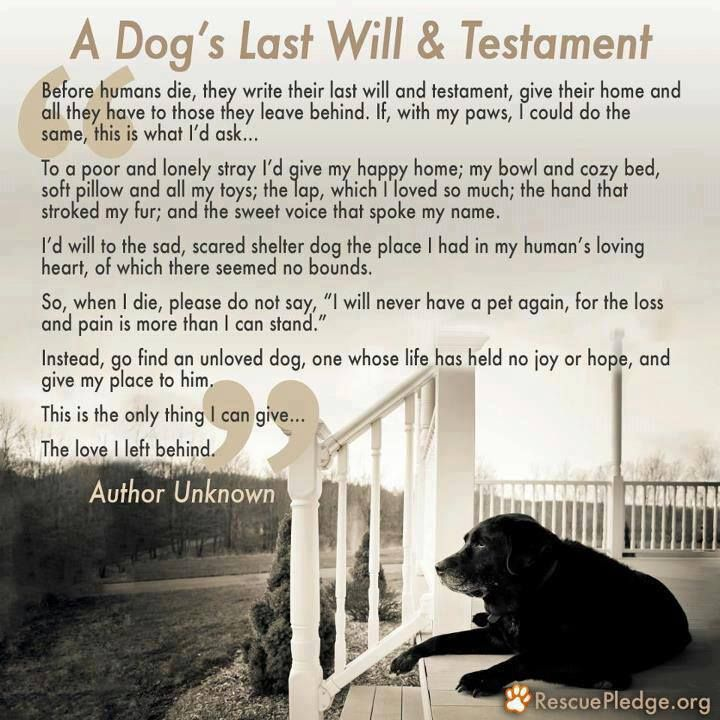 A dog's last will and testament. I cried reading this! Couldn't help but to think of my Sierra & all the love she had! Not ready yet to share my love with another dog, but someday.... GETTING CLOSE TO 3 YEARS & I STILL CRY OVER MY LEONIDAS (RIP)!  MISS MY BABY SOOO MUCH ..