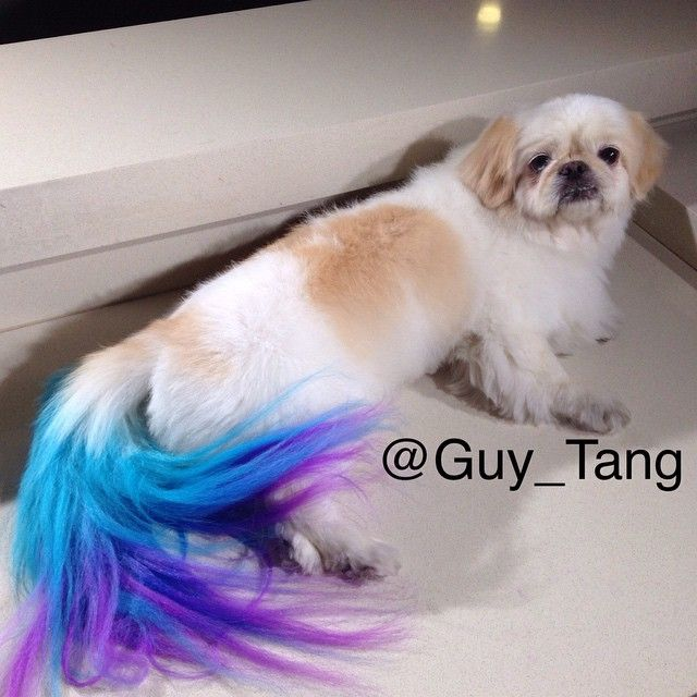 """The dog's face: """"What have you done to me? How dare you defile my fur with your colors you filthy human!"""""""
