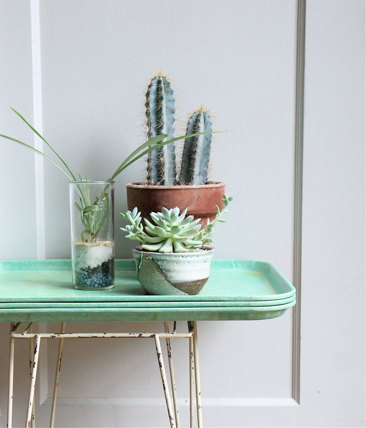 Cacti collection on vintage melamine tray in the prettiest mint hue