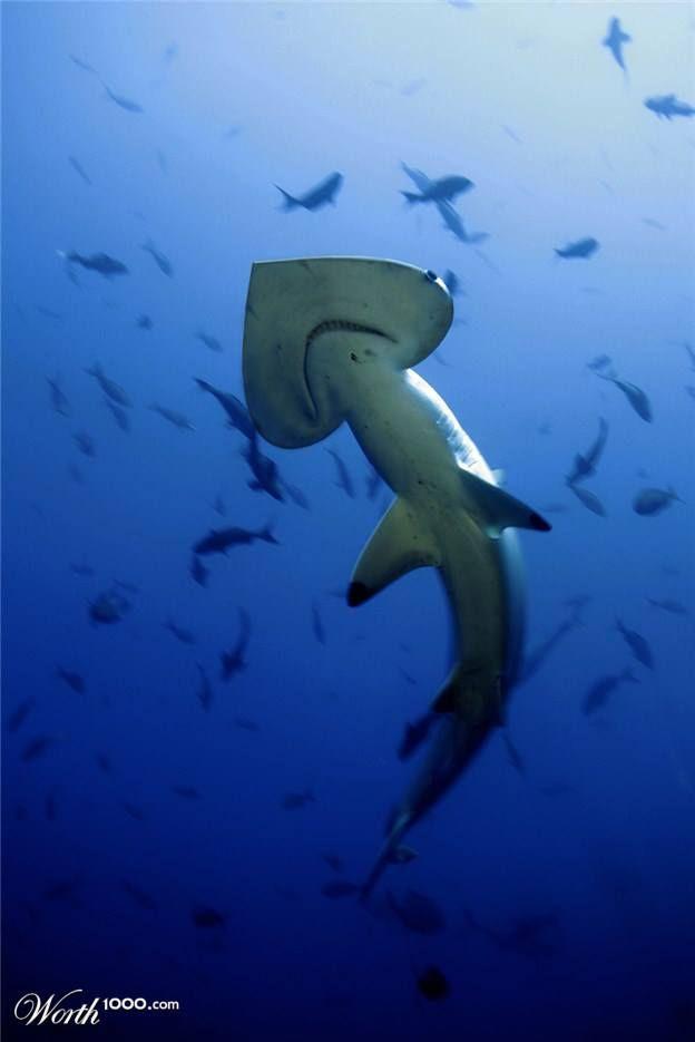 Awww I love you too, shark