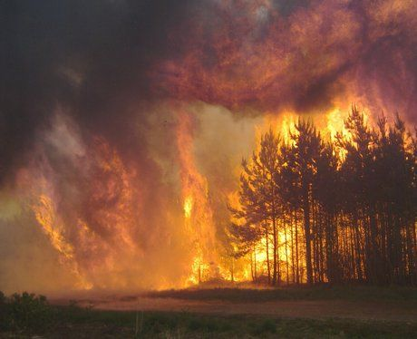 images forest fires - Google Search