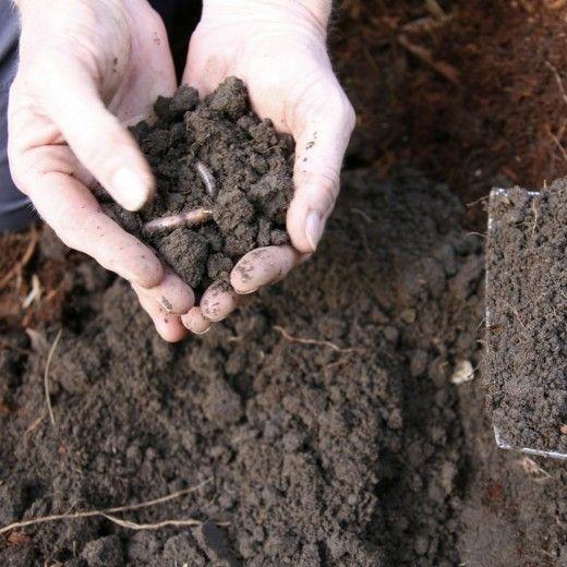 Виды почв, их особенности и способы улучшения.  К основным видам почв, с которыми чаще всего сталкиваются огородники России, относятся: глинистая, песчаная, супесчаная, суглинистая, известковая и болотистая. Каждая из них имеет как положительные, так и отрицательные свойства, а значит отличается в рекомендациях по улучшению и подбору культур