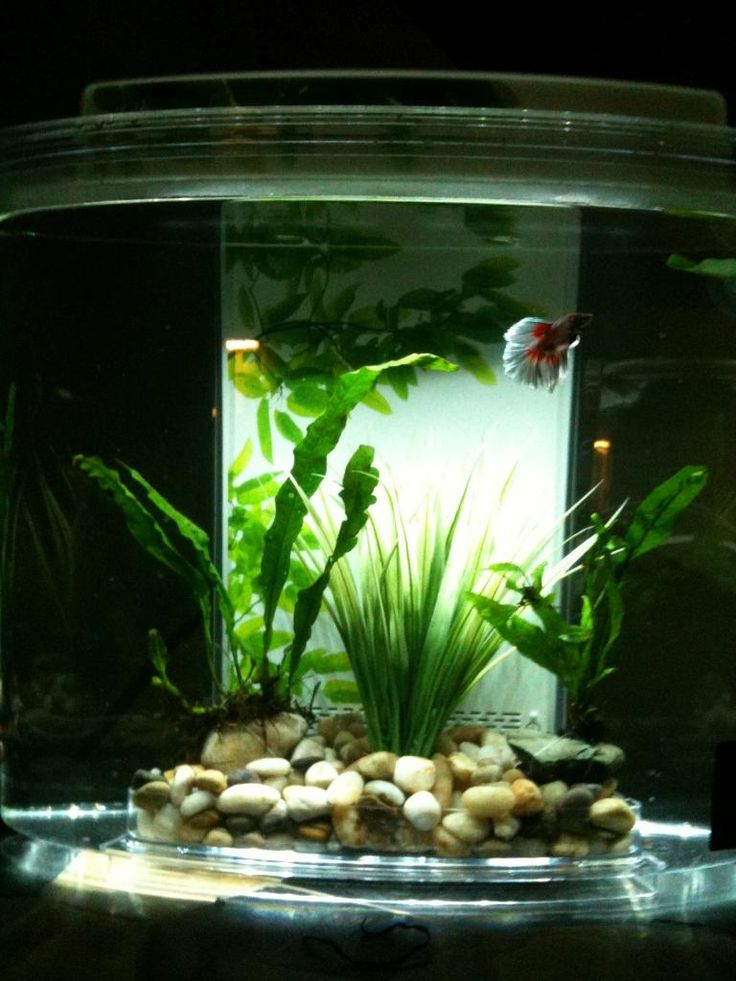 176 best aquarium plants and tanks images on pinterest for Betta fish floating