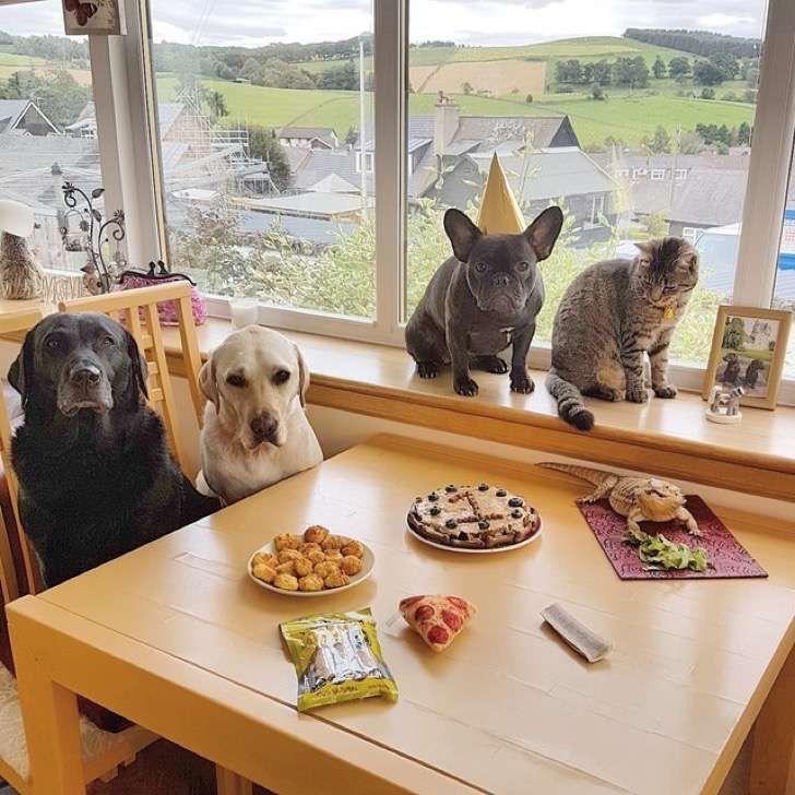 Le hicieron una fiesta por su primer cumpleaños perruno. Y las fotos del momento son las más épicas