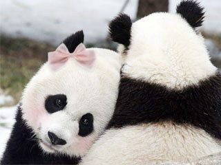 Too cute!  #pink #panda #bear