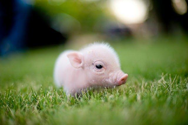 Belki de bugüne kadar hiç görmediğiniz yavru hayvan fotoğraflarını bulduk! :) http://www.hadigenc.com/2014/11/bu-minik-hayvanlar-daha-once-gormediniz.html #Fotoğraf #pic #animal