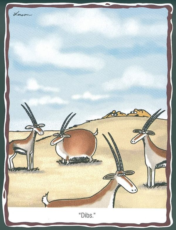 hilarious far side cartoons - Google Search