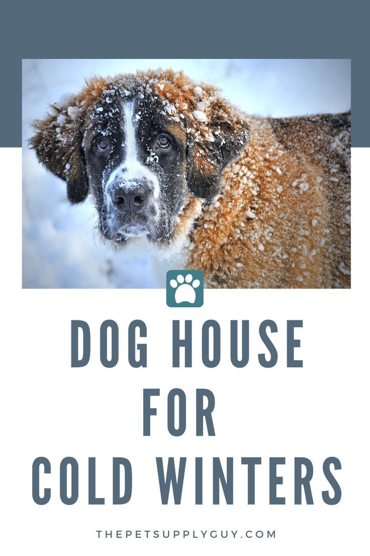 Best Dog House For Winter Cool Dog Houses Dogs Best Dogs