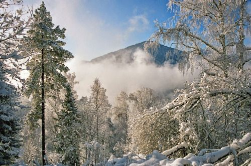 Алтайские горы, Алтай, Сибирь | Altai Mountains, Altai, Siberia