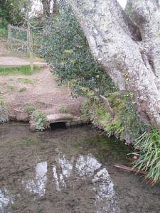 St Petroc's Well: Bodmin, Cornwall