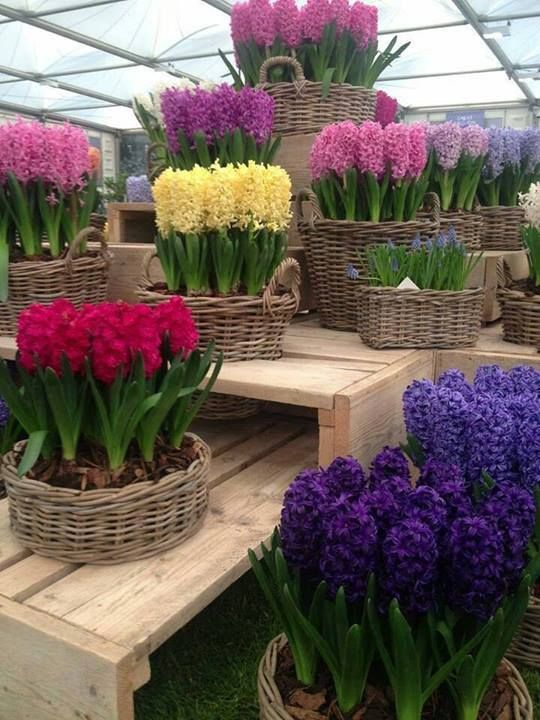 Flower Bulb Baskets : Images about spring on