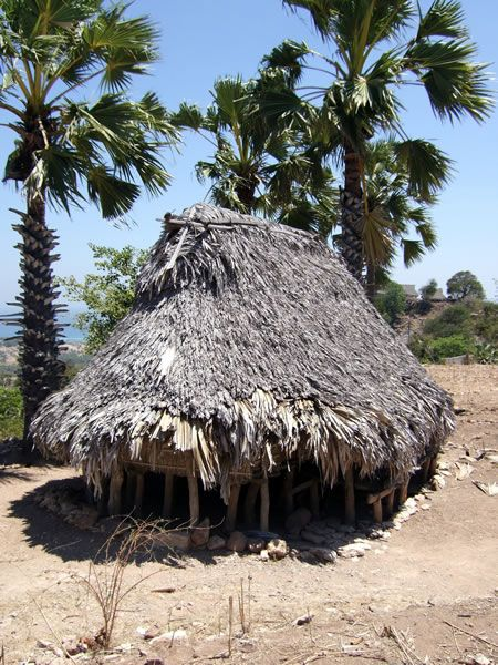 A house with a lontar-leaf roof, Savu.   In the dry islands of eastern Indonesia, communities grow with the lontar palm (Borassus flabellifer). Lontar leaves thatch villages of lontar-post houses. Locals in lontar-leaf hats carry lontar sap in lontar-leaf baskets, and boil it overlontar-leaf fires while they sit on lontar-leaf mats. In Bali,lontar-leaf books preserve the knowledge of past generations. In Savu and Rote, music pours from sasandoharps, made from bamboo and lontar palm leaf.