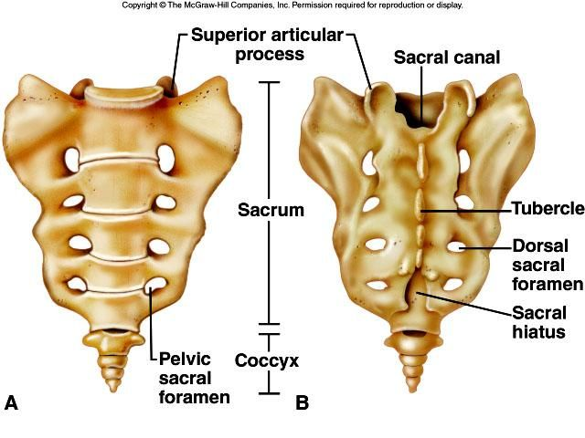 38+ Where is your sacrum ideas in 2021
