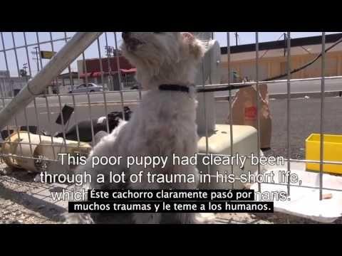 Un cachorro que trata de asustar a la gente que se le acerca obtiene exactamente lo que se merece | CPost - Posteando Curiosidades