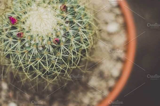 Prickly Potted Cactus by Rene Jordaan Photography on @creativemarket