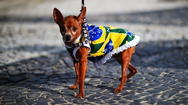 my personal diary: FOUR-LEGGED BRAZIL SUPPORTER