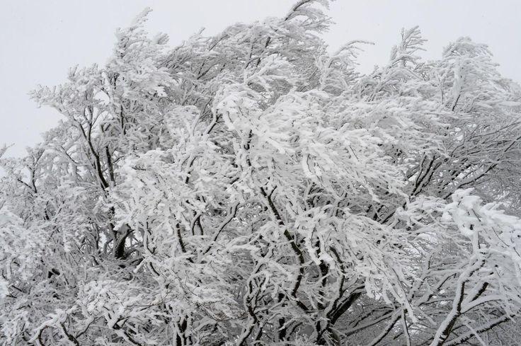 26.11 La neige recouvre les arbres de la Forêt-Noire en Allemagne.Photo: AFP/Winfried Rothermel