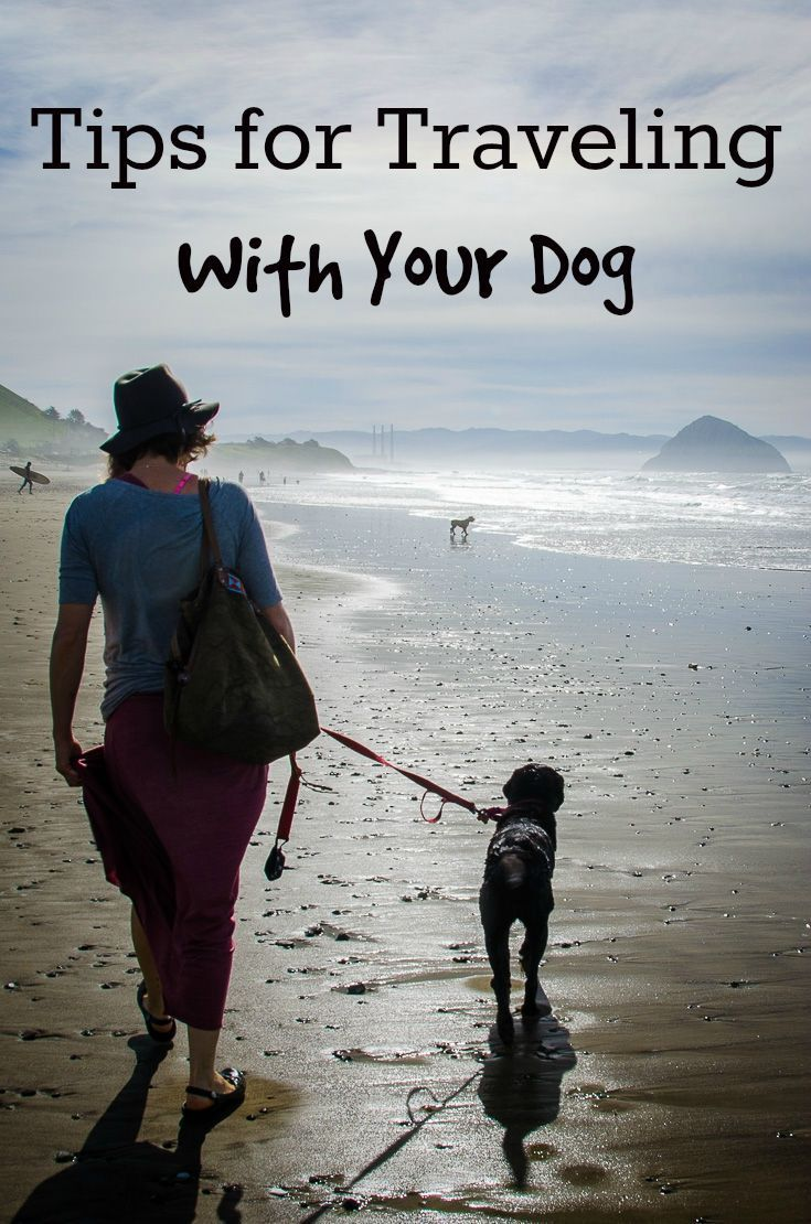 How to take your dog on vacation: Tips for traveling by car, staying sane in the hotel, and finding dog-friendly things to do: http://www.everintransit.com/tips-for-traveling-with-your-dog/ // Dog friendly travel tips