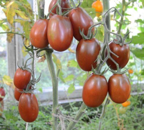 Rare-Seeds-Tomato-Chernyy-Mavr-Black-Moor-Organic-Heirloom-Variety