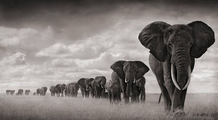 Nick Brandt photography.                                                                                                                                                                                 More