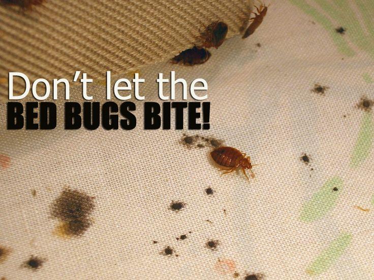 Best Bed Bug Exterminator Melbourne