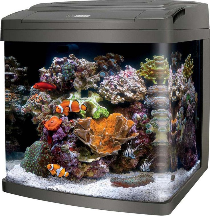 Aqueon Products-Glass-Coralife Bio Cube Led Aquarium- Black 16 Gallon