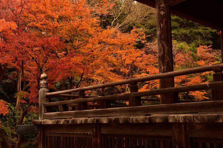 保存版今年の見頃はいつ秋の鎌倉散策へ紅葉の名所見所案内マップ