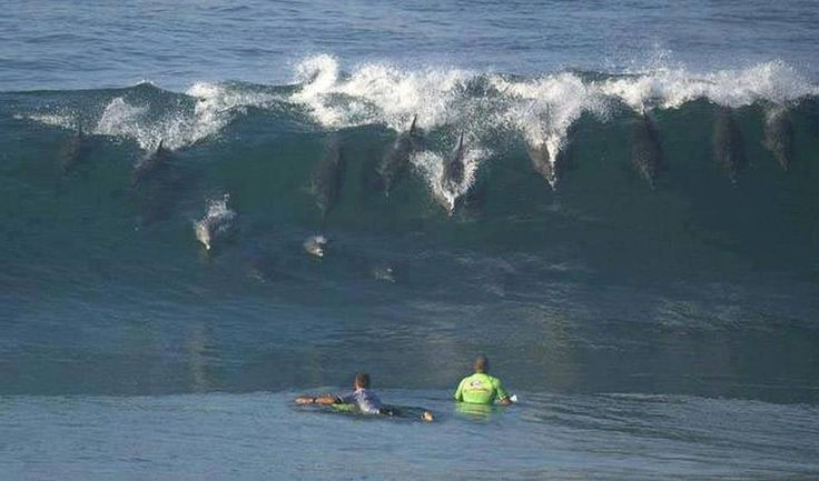 Surfing Dolphins, Jeffery's Bay, South Africa :D