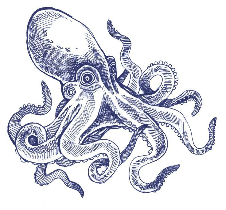 46 best Image File images on Pinterest Drawings Octopus drawing