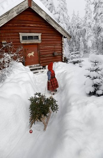 Log Barn and Little Red Riding Hood toting a Christmas Tree.
