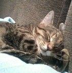 Le chat de gouttière
