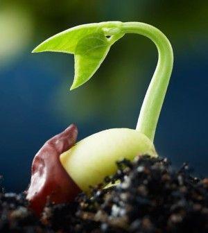 Curarsi con il cibo: l'incredibile carica energetica dei germogli!