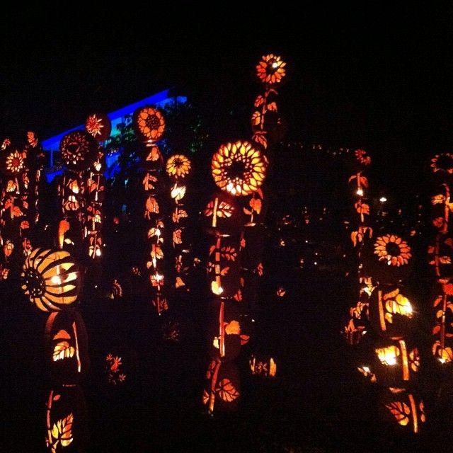 The Great Jack O'Lantern Blaze, Maior e mais emocionante de Halloween retorna para 25 noites em 2013! Esculturas em abóbora movimentam o evento. by: justdragon #Halloween #photos #photograph