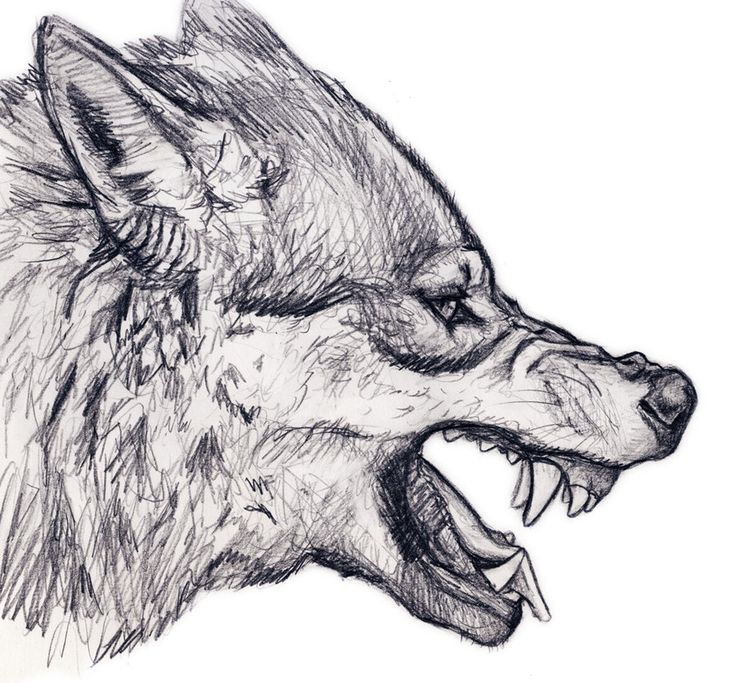 Wolf Snarl by silvercrossfox on deviantART