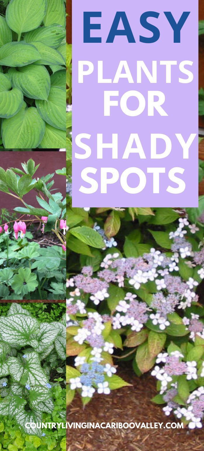 Create A Perennial Flower Bed For The Shade In 2020 With Images