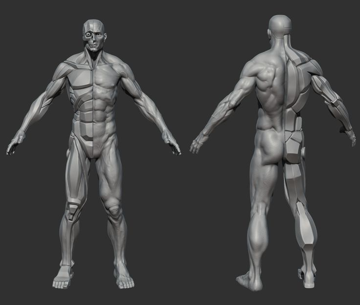 Davidness is now done with is planar anatomy body statue created with #ZBrush. He also started a Kickstarter campaign, allowing you to buy this statue at 1/8 scale (9 inches). http://zbru.sh/lr