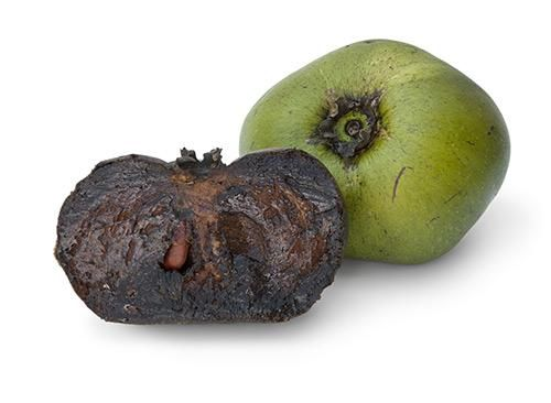 """Black Sapote -   Known as the """"chocolate pudding fruit,"""" black sapote tastes like … chocolate pudding. Deceptively rich and creamy, a 100-gram serving has 130 calories and 191 mg of vitamin C, or twice that of an orange. ("""