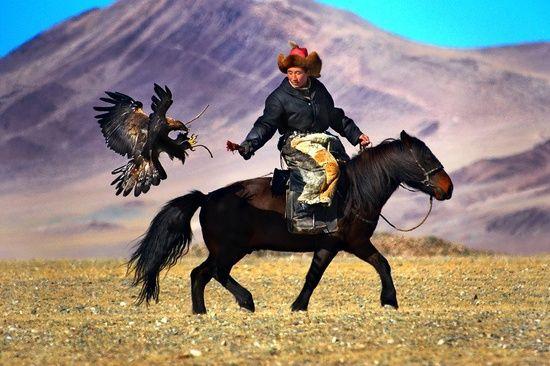 Mongolian falcon catcher
