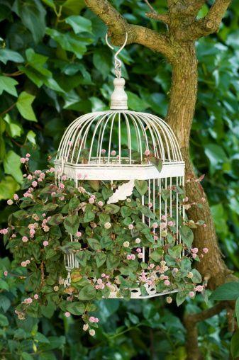 birdcage with flowers... da appendere ad una delle piante da frutto (dentro una succulenta o cmq una perenne)