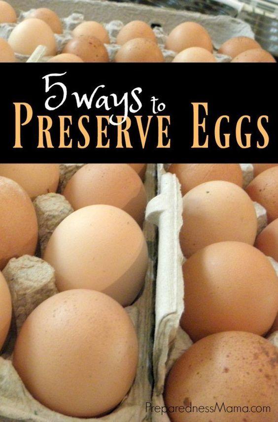 5 Ways to preserve eggs for food storage   PreparednessMama